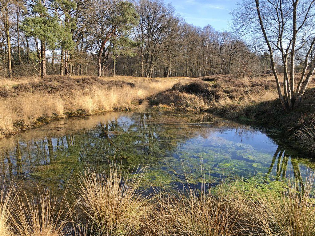 Wandelen op de Wolfhezerheide bij het Molenbeeksepad Klompenpad