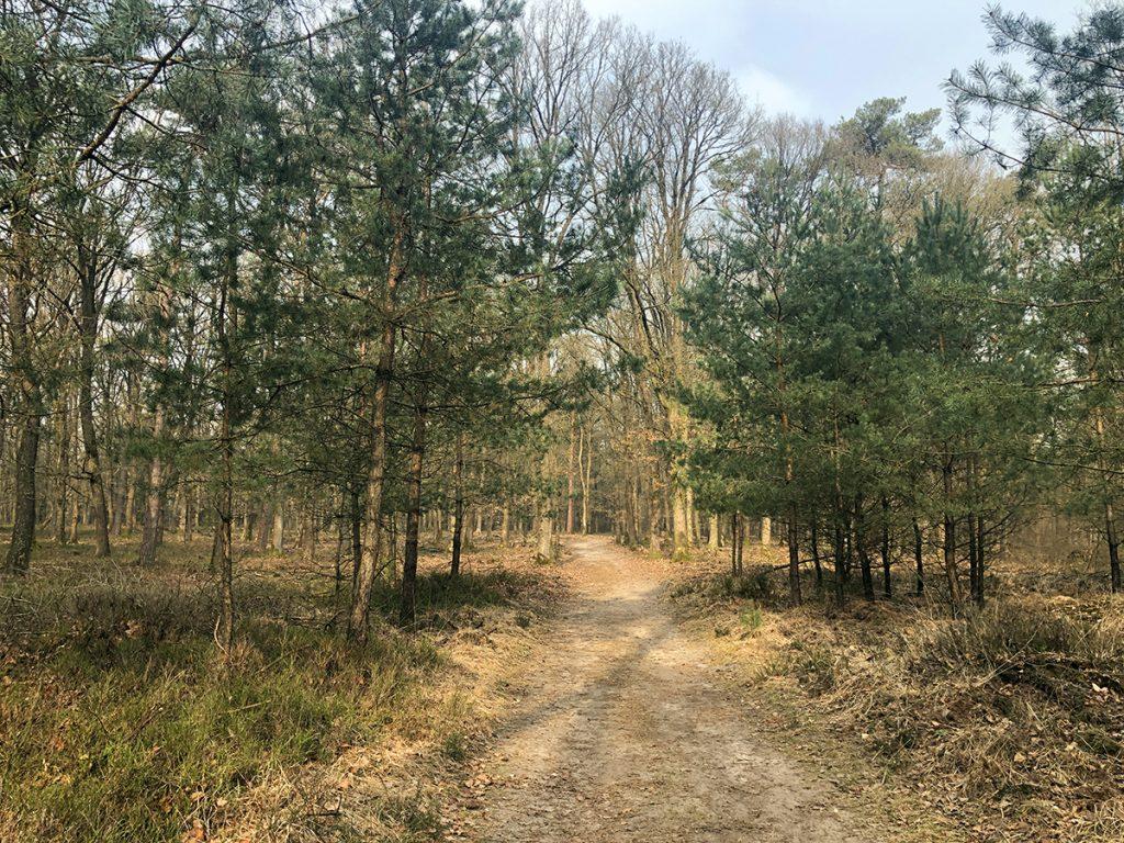 Het Loenense Bos