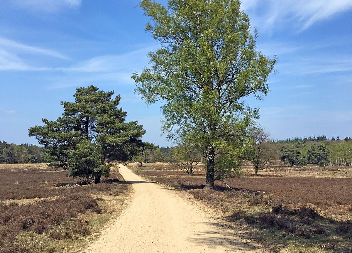 Wandelen in Loenen op de Veluwe