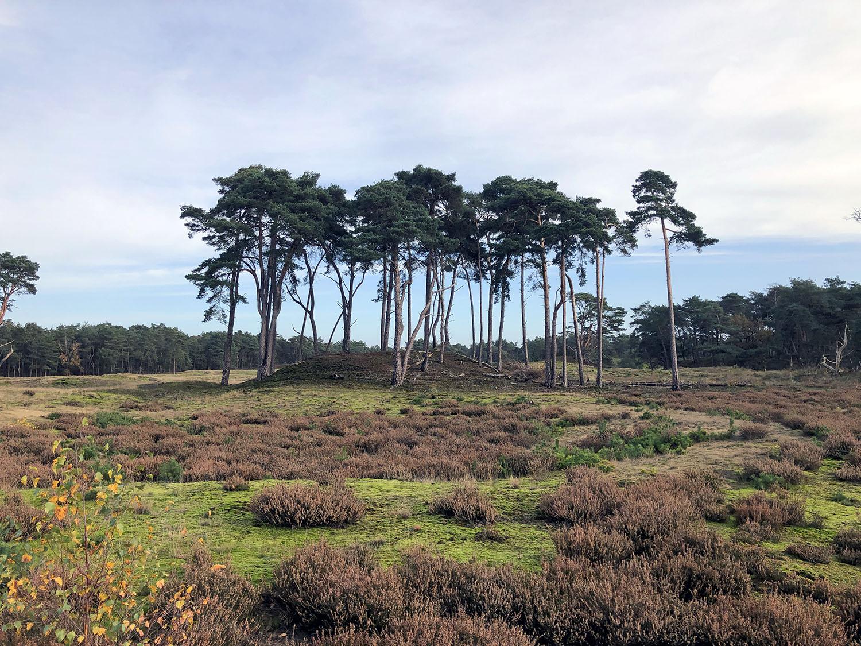 Heide op het Wekeromse Zand