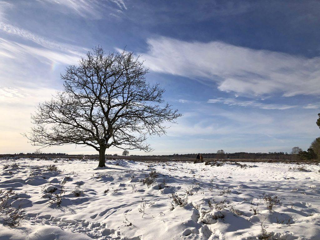 wandelen op de Ginkelse Heide in de winter